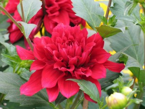 Bloom ready for Bloodshed